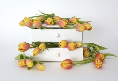 tulips coming out of drawers