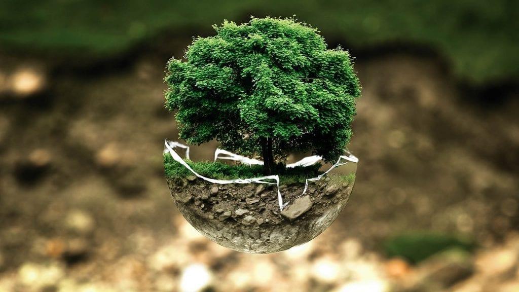 tree in bowl