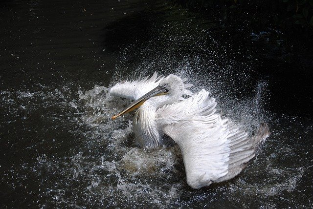 a bird flapping their wings in the water