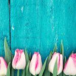 Tulips against wood